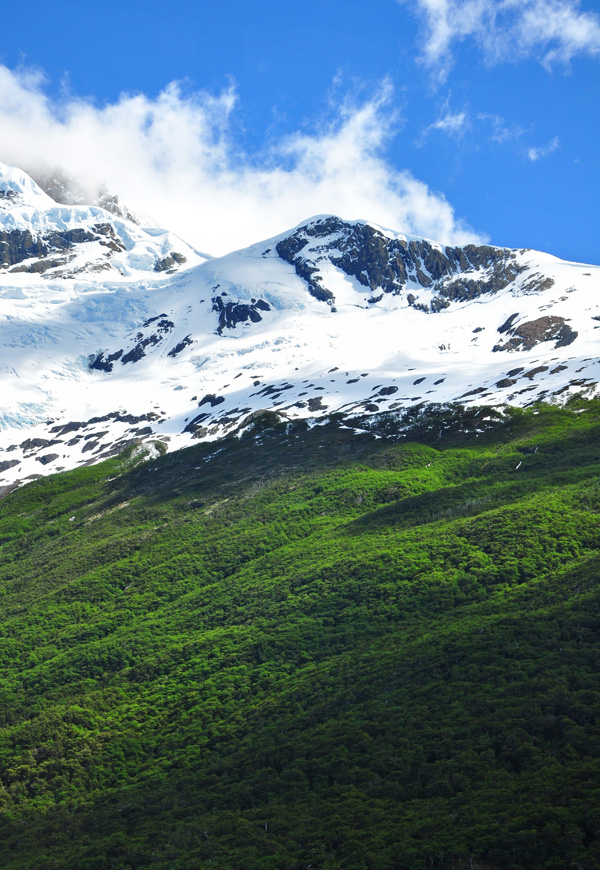 Snowy Mountain and Forest